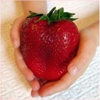 20 Sementes De Morango Vermelho Gigante - Frete Grátis
