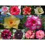 10 Sementes Rosa Deserto Raras 1 De Cada Cor + Frete Grátis