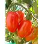 120 Sementes De Tomate Italiano Para Molhos Frete Grátis