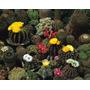 10 Sementes De Cacto Coloridos-frete Grátis-muda-rosa-cactus