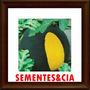 Sementes Melancia Polpa Amarela 10 Sementes + Brindesss