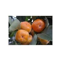 Caqui Asiáticos ¿ 10 Sementes ¿fruta Raras + Brindes P Mudas