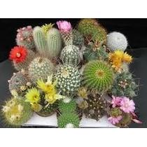 Cactus Ornamentais Sortidos Cactus 100 Sementes+manual