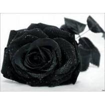 25 Sementes Rosa Preta Negra Exótica Rara + Frete Grátis