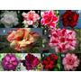 10 Sementes Rosa Deserto Raras 1 Cada Cor Kit2+ Frete Grátis
