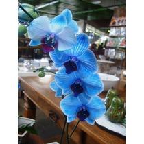 Frete Grátis - 5 Sementes De Orquídea Azul