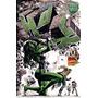 Marvel Especial: Mulher Hulk Vol.12, Panini