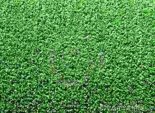 grama sintetica decorativa mercado livre:Tapete De Grama Sintetica Artificial 2x3m – R$ 223,70 no MercadoLivre