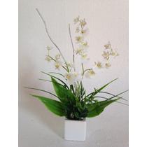 Arranjo Mini De Orquídea Chuva De Ouro Branca,