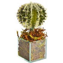Arranjo Floral - Cactus Do Saara Em Vaso Se Vidro