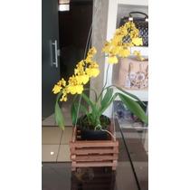 Cachepot Madeira Cesto E Porta Vaso Para Orquideas Kit 12