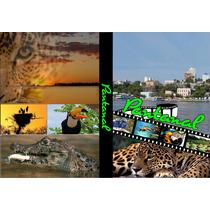 Dvd Do Pantanal Sul Matogrossense