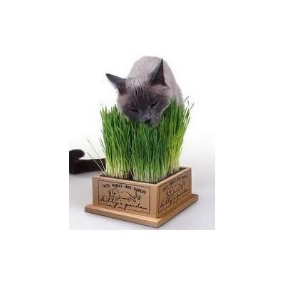 sementes para pet grass grama gatos c es coelhos