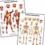 Kit 2 Mapas Anatomia Esqueleto Músculos 60x80cm Para Casa