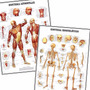 Kit 2 Mapas Esqueleto Músculos 60x80cm Enfeite Para Sala