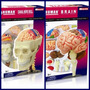 Anatomia Do Cerebro Crânio E Nervos Kit 4d Master