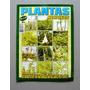 Plantas Medicinais Os Benefícios Ao Alcance De Todos