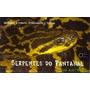 Serpentes Do Pantanal (snakes Of The Brazilian Pantanal)