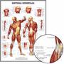 Poster Músculos 65x100cm Foto Fisioterapia Enfeite Para Sala