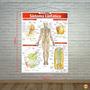 Banner Sistema Linfático Resumão Medicina