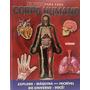 Corpo Humano De Dentro Para Fora