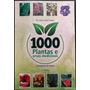 Fitoterapia 1000 Plantas E Ervas Medicinais