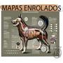 Mapa Anatomia Cachorro Cão Pet Veterinario Sistemas